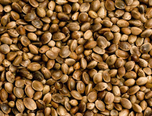 Hemp Seeds – New legislation for use in food products